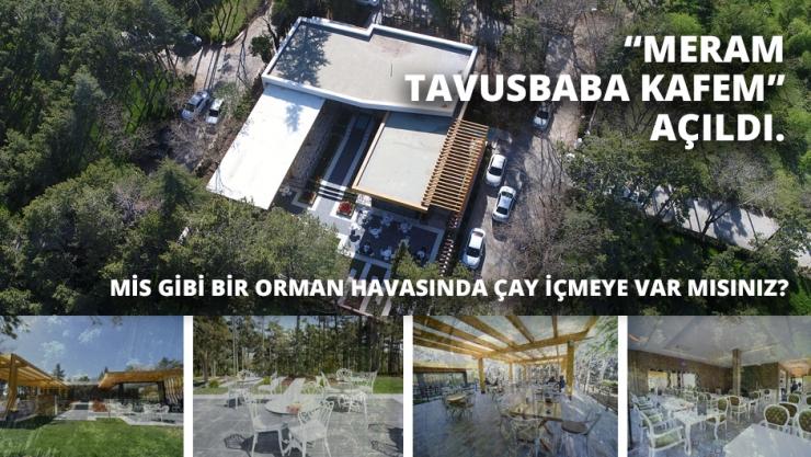 Tavusbaba Kafem